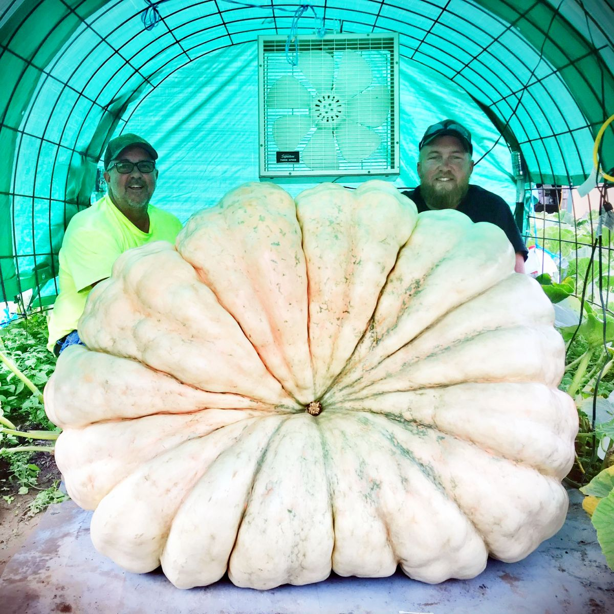 Giant Pumpkin Doug Kisamore